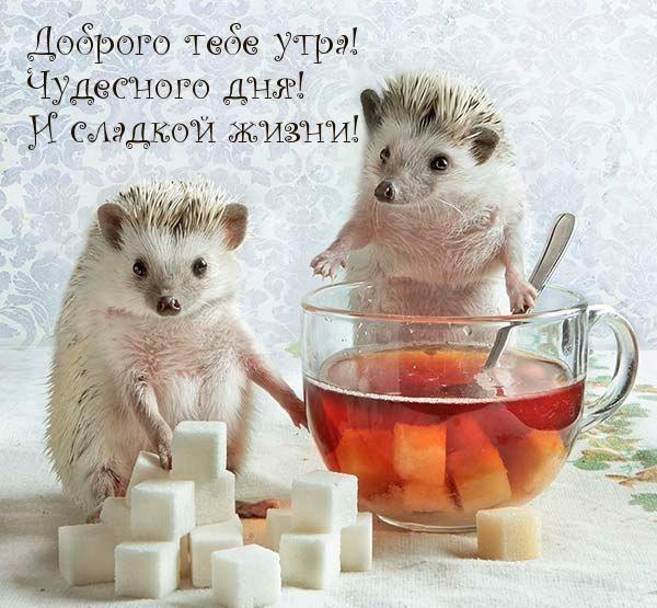 Доброго тебе утра! Чудесного дня! И сладкой жизни!